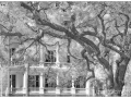 Charleston_IR_20190329_193_edit_blog