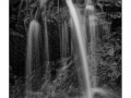 Smokies_20190122_152-2_edit_bw_blog