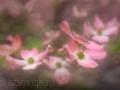 sg_20110428-0143_simplify2_blog