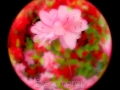 sg_20110510-0071_edit_blog
