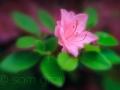 sg_20110513-0092_edit_blog