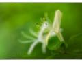 sg_20120605-0338_edit_blog