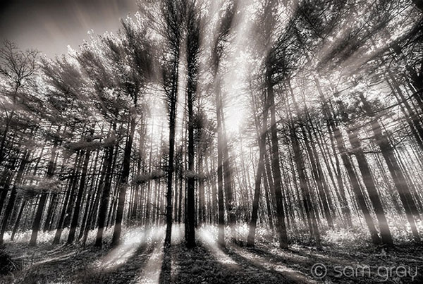 Glowing Pines - IR, D200