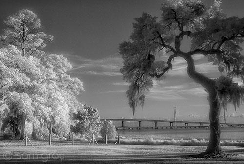 Trees and Bridge - D200 IR converted