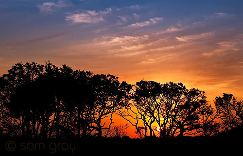 Sunrise From The Marshes - D700, 70-200 f/2.8
