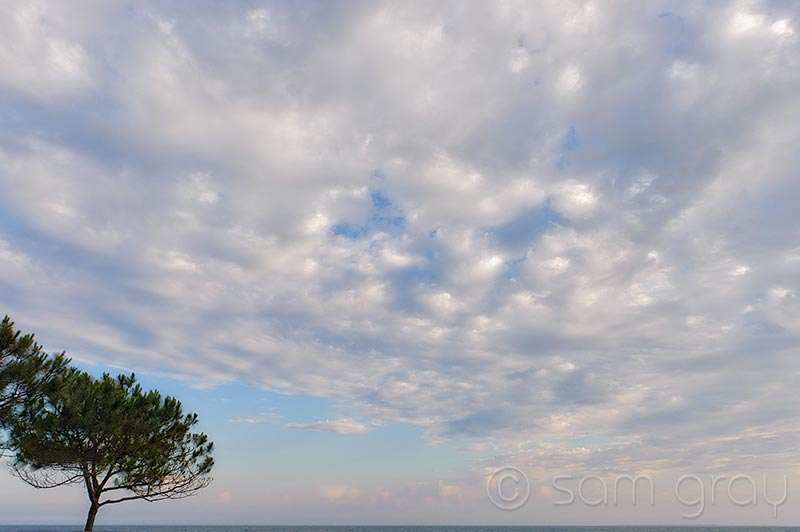 Pine Tree and Clouds