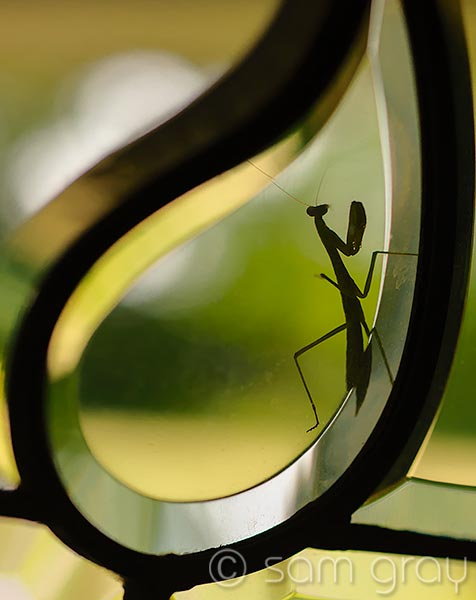 Mantis at the Door