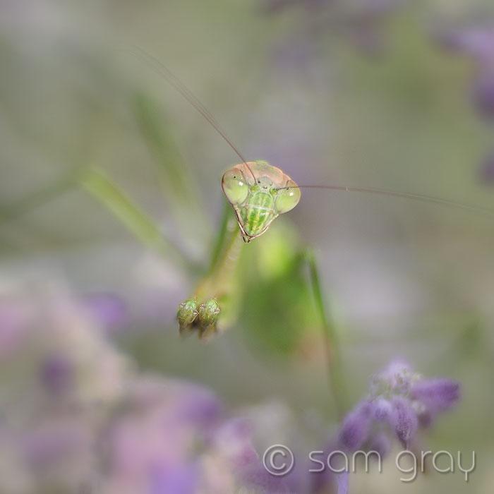 Lensbaby Mantis