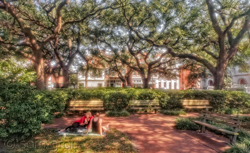 Savannah Afternoon
