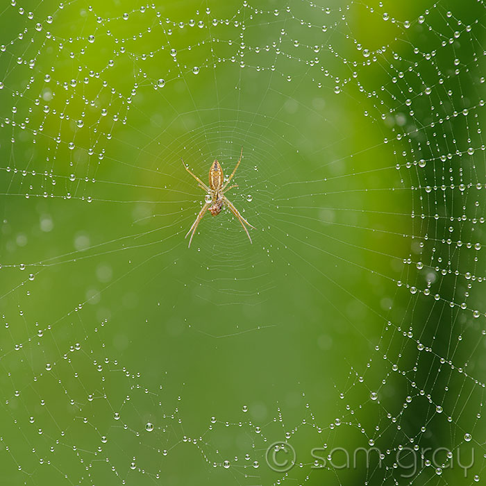 Helicon Focus Spider Web - D700, 70-200 w/1.3 + 500D