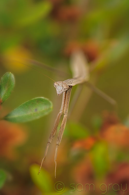 Missing Mantis, Helicon Focus - D700, 70-200 w/1.3 & 500D