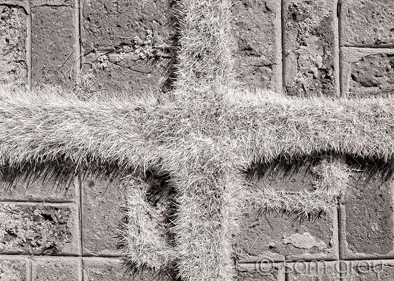 Bricks & Grass Texture Study - D200, IR converted, 18-35mm