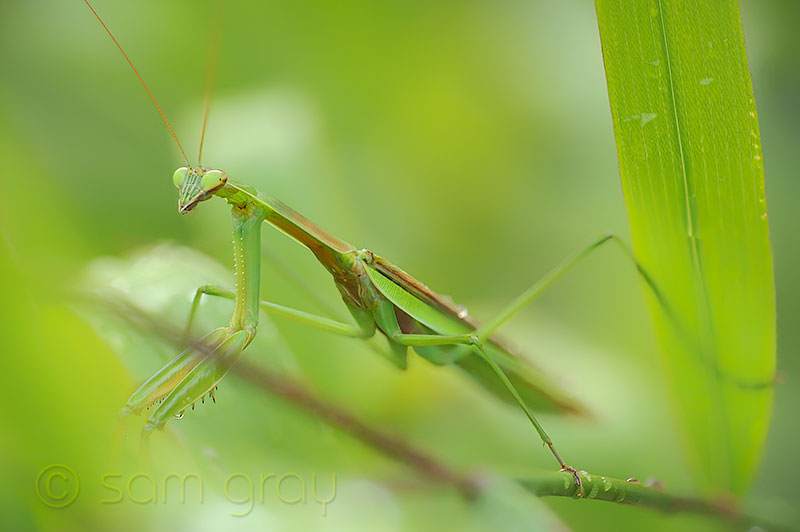 Helicon Focus Mantis - D700, 70-200mm, 15 image stack