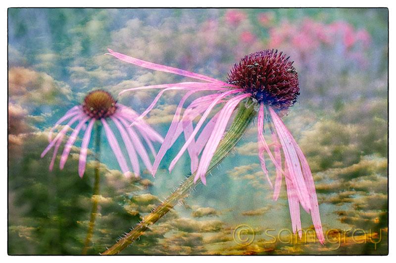 Floral Texture - Fuji X-T1, 18-55