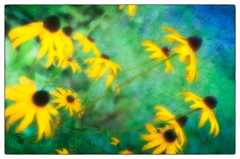Summer Flowers & Texture - Fuji X-T1, 18-55mm