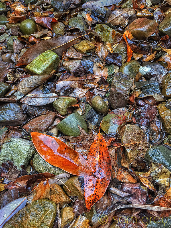 Wet Leaves & Rocks - iPhone 6, NOT HDR